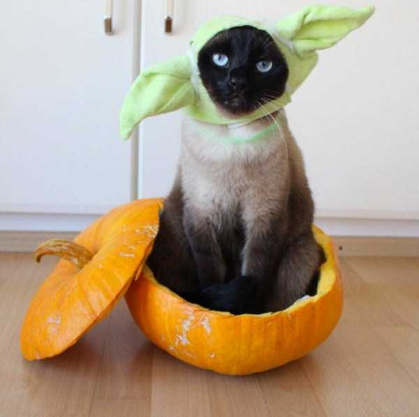 little-lenny-siamese-cat-costumes (15)