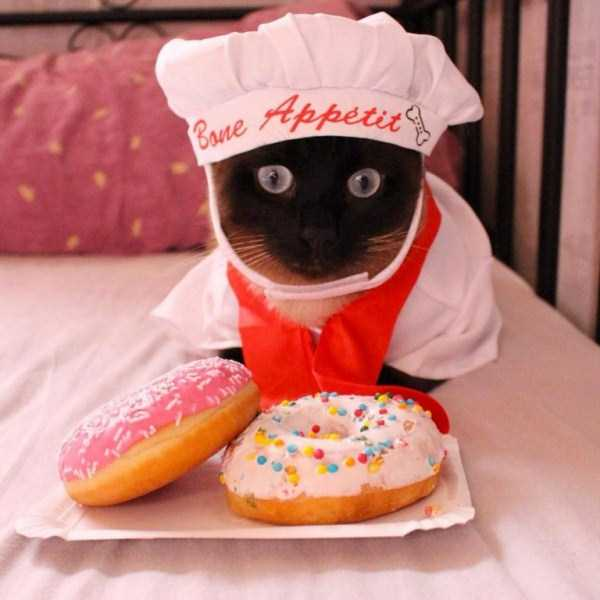 little-lenny-siamese-cat-costumes (16)