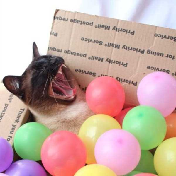 little-lenny-siamese-cat-costumes (18)