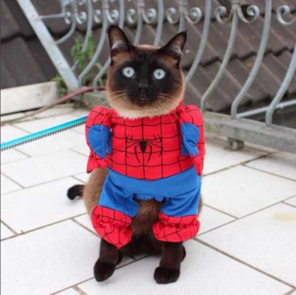 little-lenny-siamese-cat-costumes (19)
