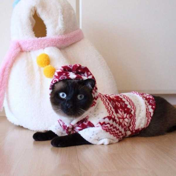 little-lenny-siamese-cat-costumes (2)
