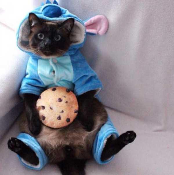 little-lenny-siamese-cat-costumes (22)