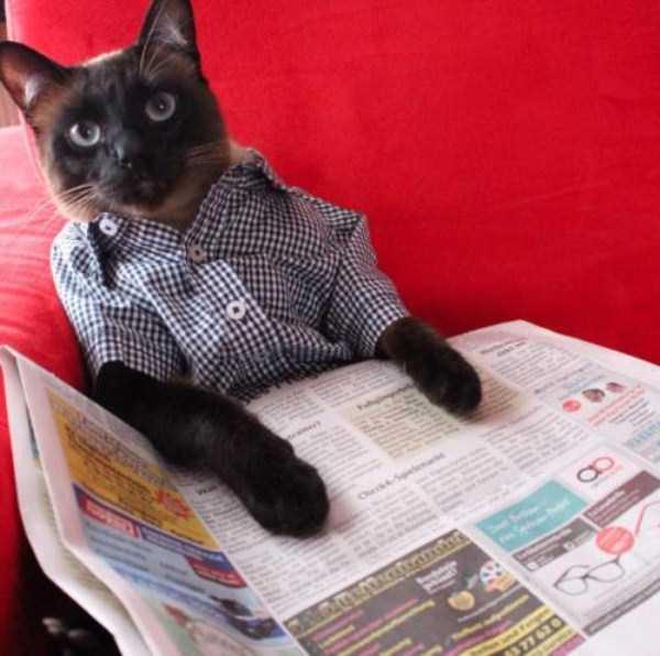little-lenny-siamese-cat-costumes (24)