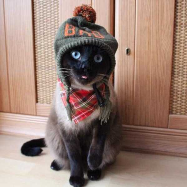 little-lenny-siamese-cat-costumes (25)