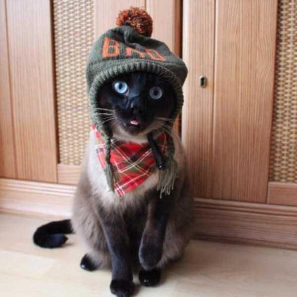 little-lenny-siamese-cat-costumes (25)