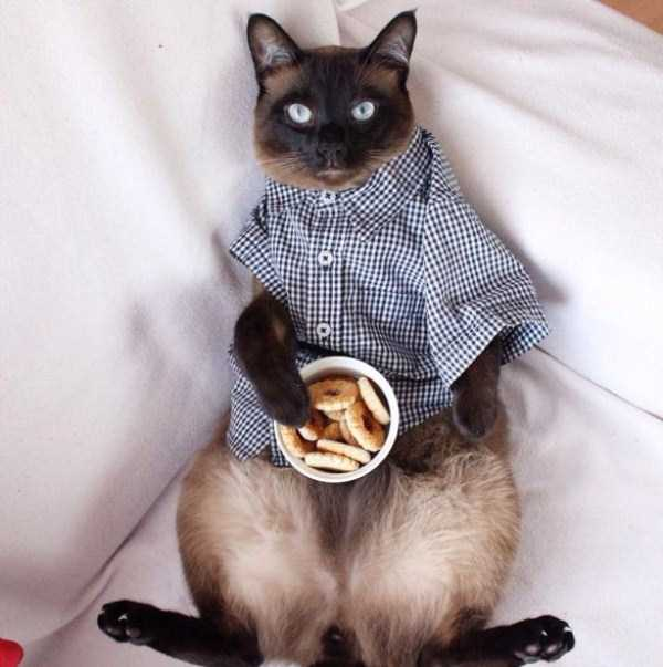 little-lenny-siamese-cat-costumes (5)