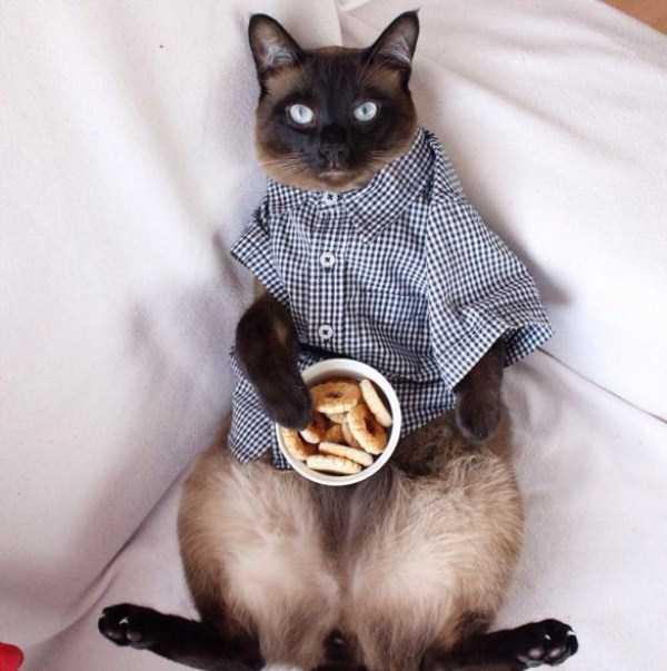 little-lenny-siamese-cat-costumes (5)