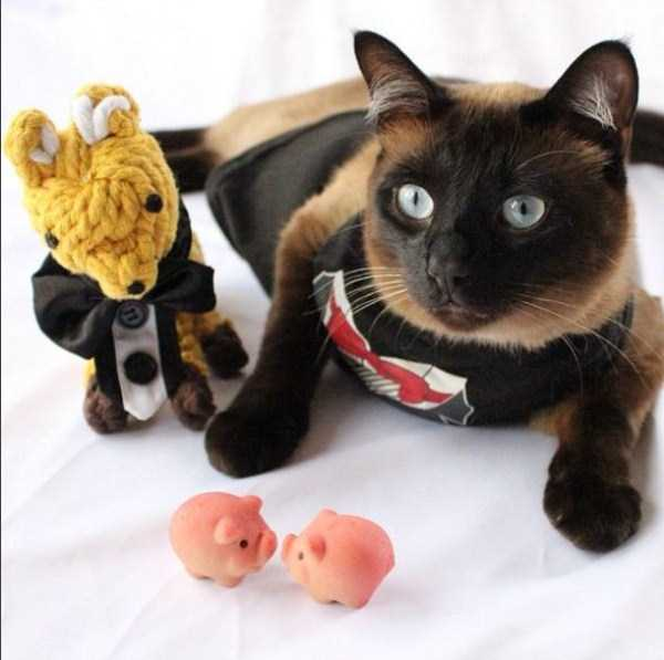 little-lenny-siamese-cat-costumes (6)