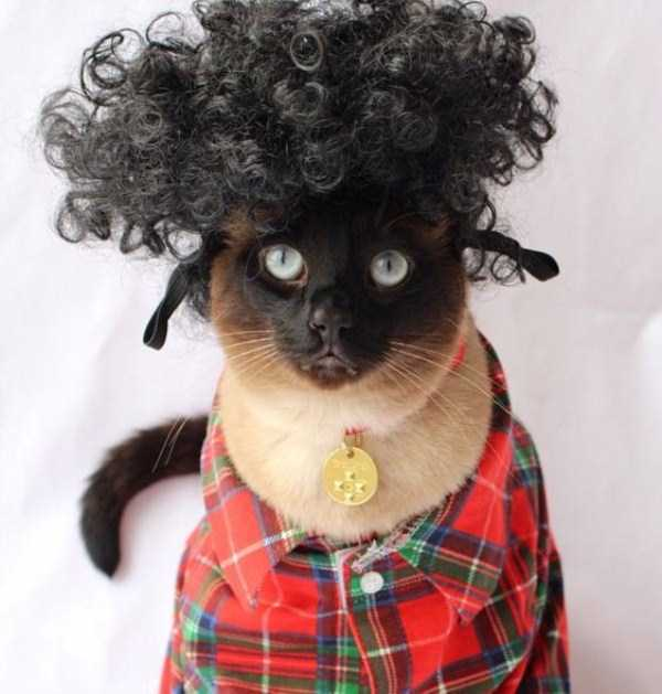 little-lenny-siamese-cat-costumes (7)