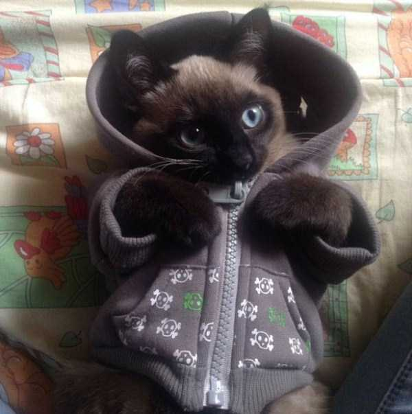 little-lenny-siamese-cat-costumes (9)