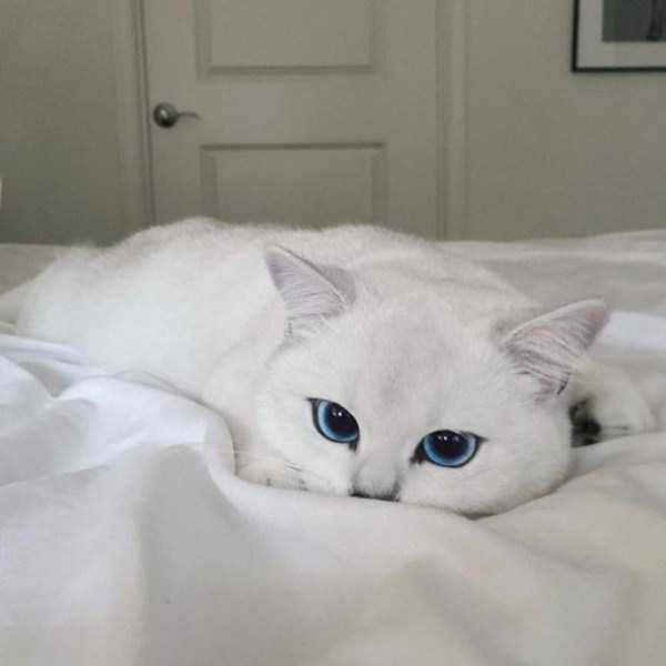 coby-cat-blue-eyes (10)