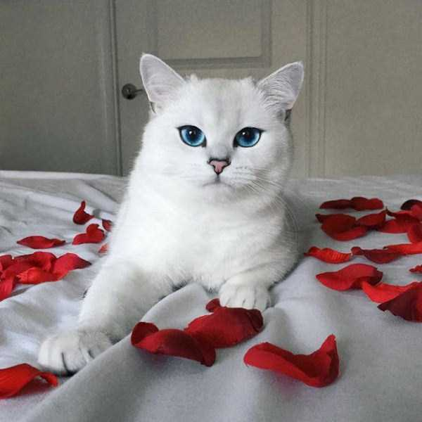 coby-cat-blue-eyes (14)