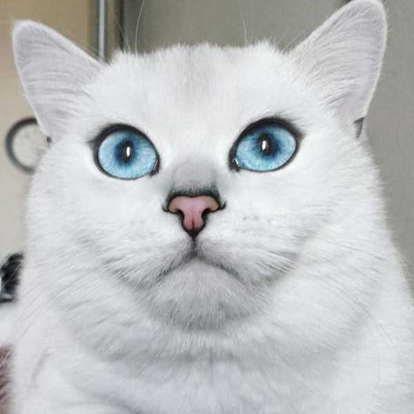 coby-cat-blue-eyes (16)