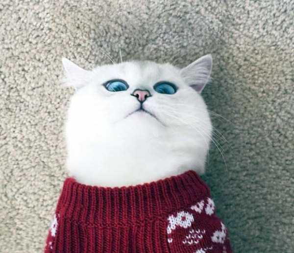 coby-cat-blue-eyes (17)