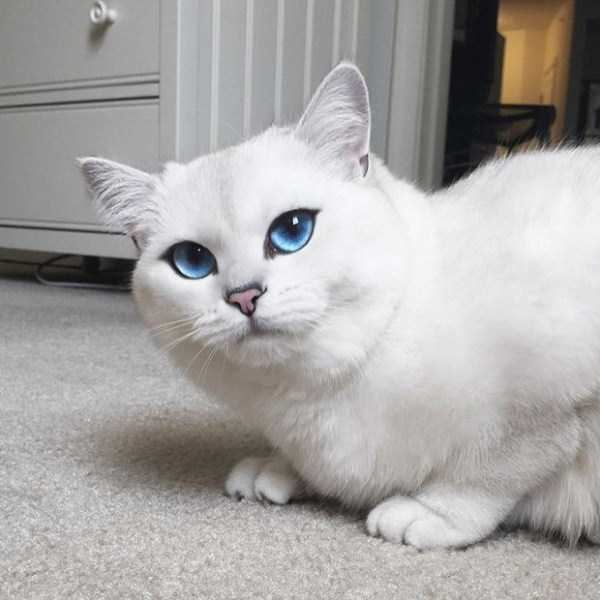 coby-cat-blue-eyes (5)