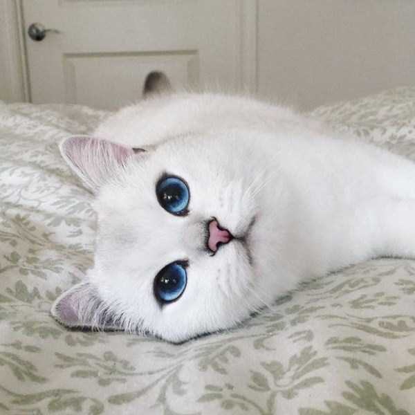 coby-cat-blue-eyes (7)
