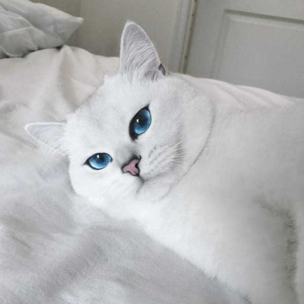 coby-cat-blue-eyes (9)