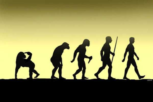 evolution-illustrations (3)