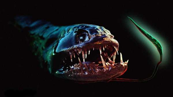 scary-deep-sea-creatures (11)
