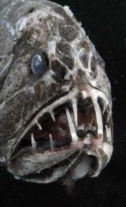 scary-deep-sea-creatures (12)