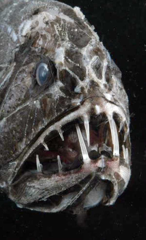 scary-deep-sea-creatures (12)