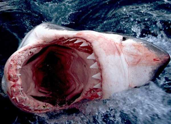 scary-deep-sea-creatures (15)