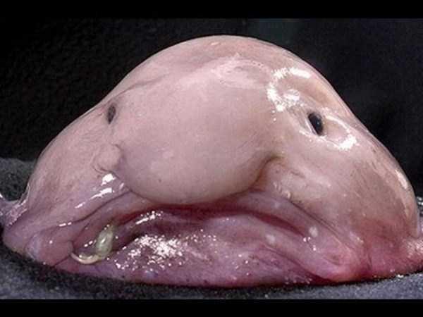 scary-deep-sea-creatures (16)
