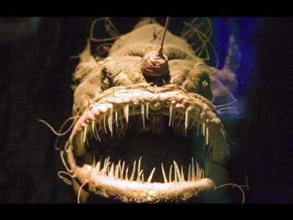 scary-deep-sea-creatures (17)