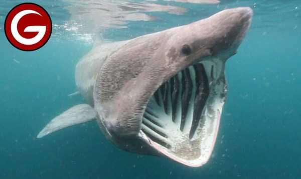 scary-deep-sea-creatures (19)