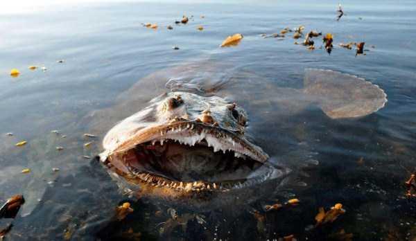 scary-deep-sea-creatures (20)