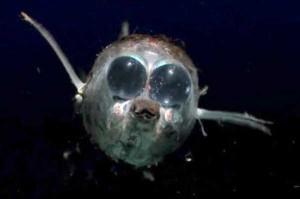 scary-deep-sea-creatures (22)