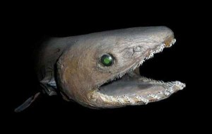 scary-deep-sea-creatures (23)