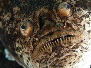 scary-deep-sea-creatures (25)