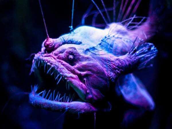 scary-deep-sea-creatures (3)