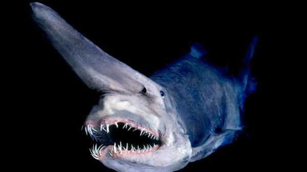scary-deep-sea-creatures (5)