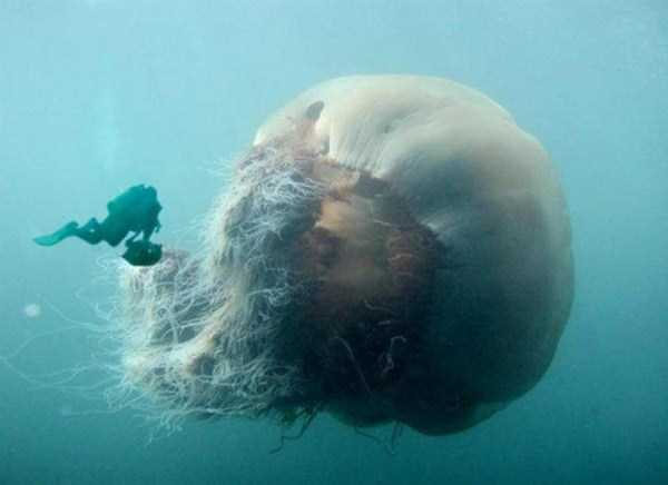 scary-deep-sea-creatures (6)