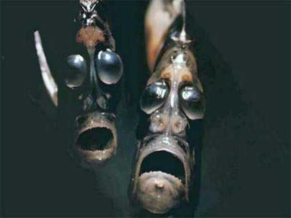 scary-deep-sea-creatures (7)