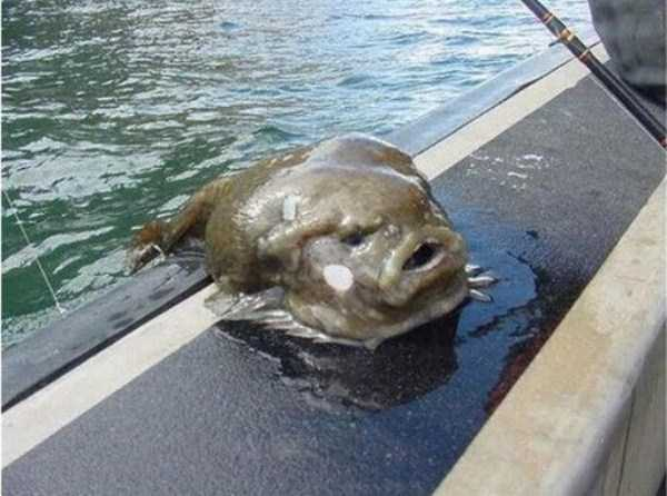 scary-deep-sea-creatures (8)