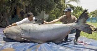 biggest-catches (13)