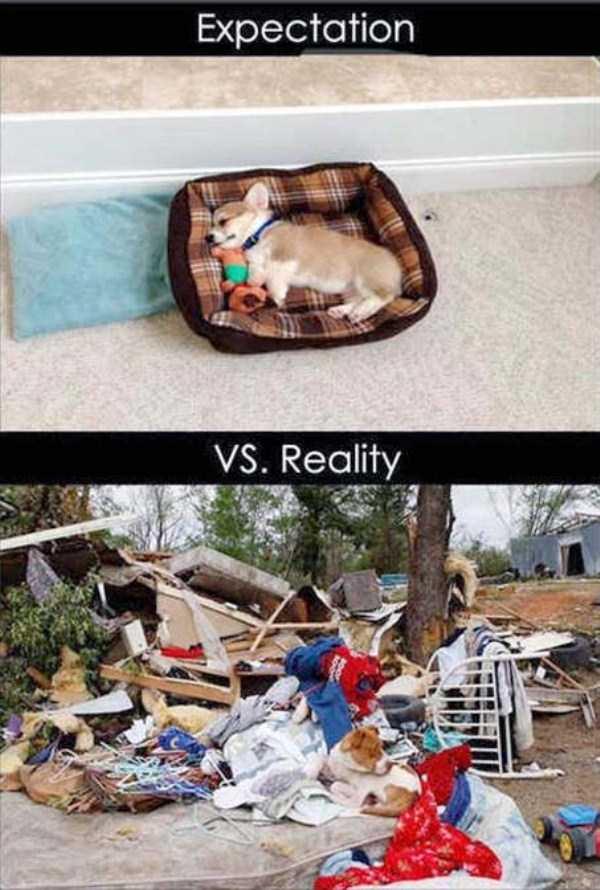 expectations-vs-reality (18)