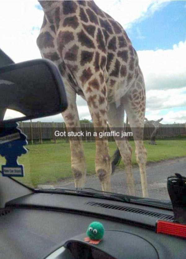 funny-clever-snapchats (16)