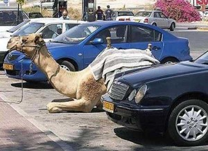 funny-parking-situations (9)