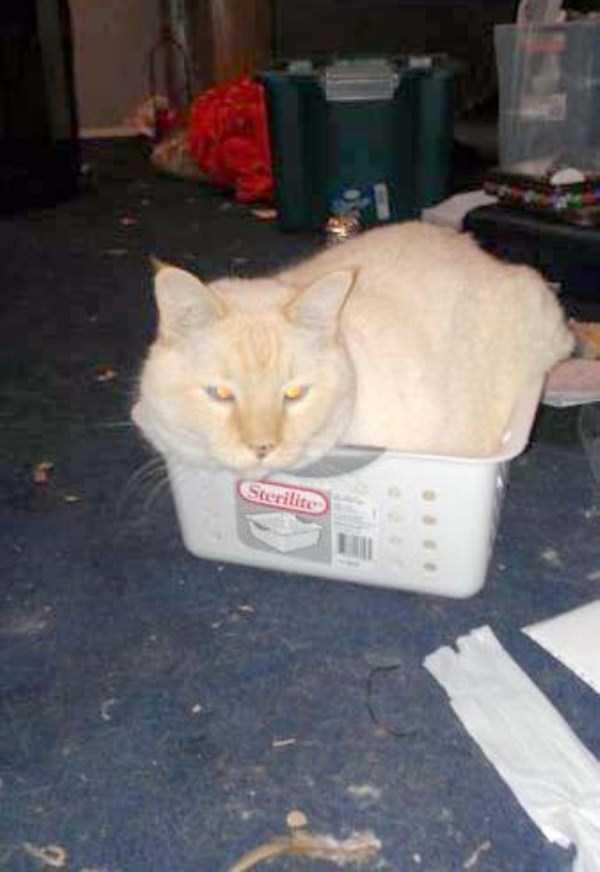 hilariously-absurd-cat-logic (30)