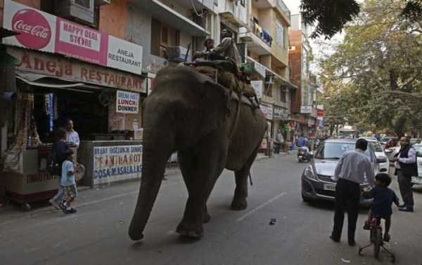 pictures-from-india (28)