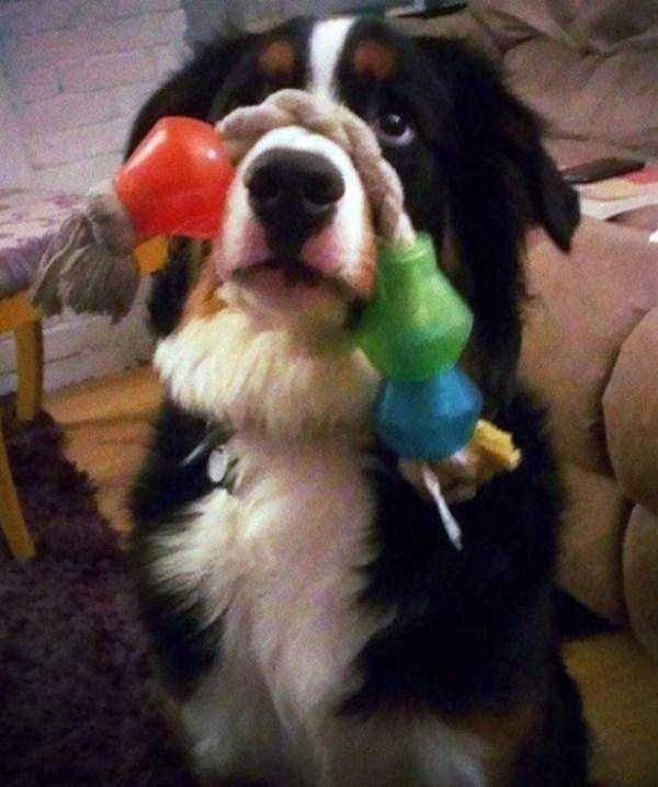 tolerant-patient-pets (17)