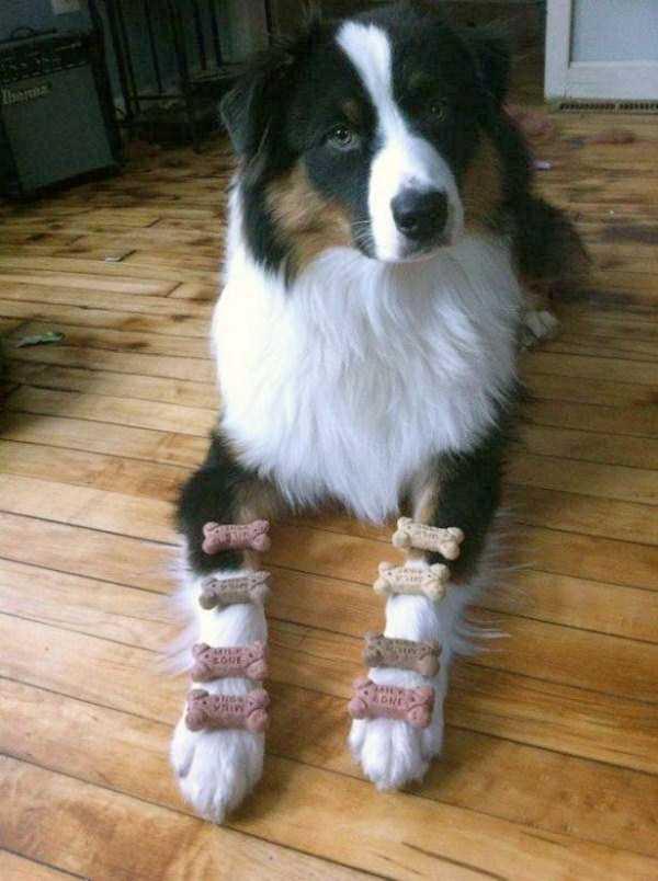 tolerant-patient-pets (2)