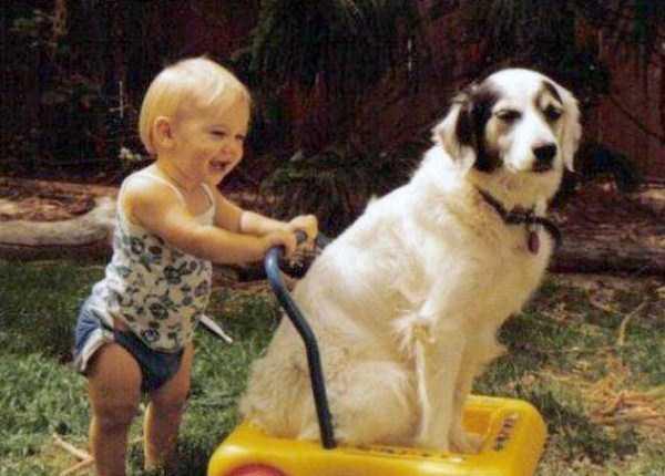 tolerant-patient-pets (22)