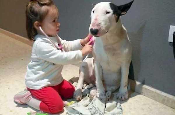 tolerant-patient-pets (27)