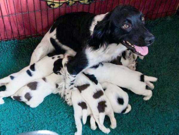 tolerant-patient-pets (4)