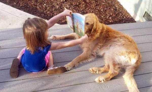 tolerant-patient-pets (5)